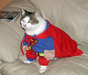 th_480574273_super_cat_122_188lo.jpg